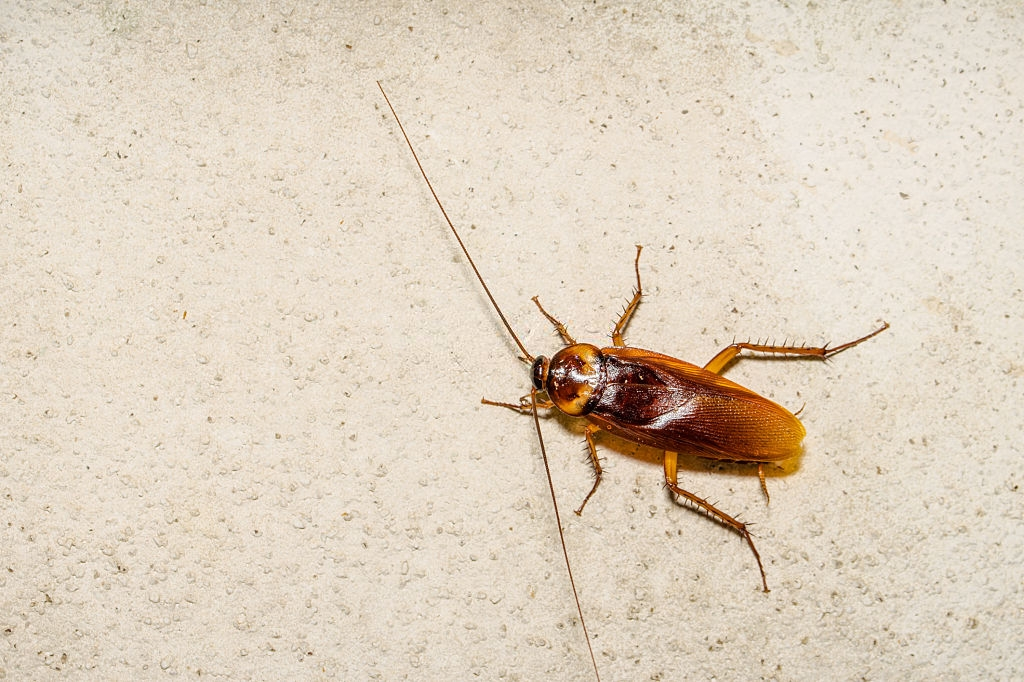 Cockroach Control, Pest Control in Greenford, UB6. Call Now 020 8166 9746
